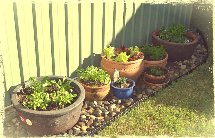 Potted herb garden tlc rescue project minsmash and workwithnaturefo