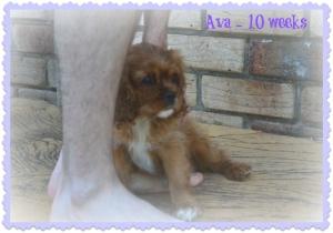 Ava - 10 Weeks
