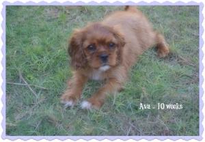 Ava - 10 weeks(2)