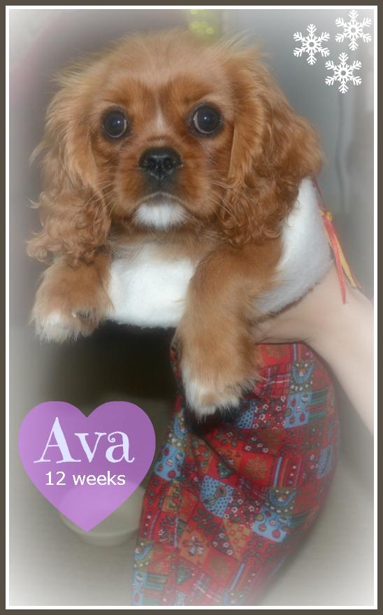 Ava - 12 wks - Photo 1 (2)