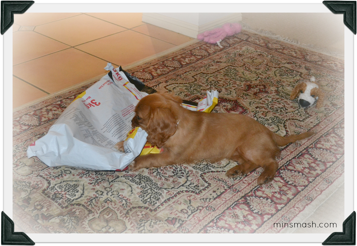 Ava - Parcel Wrapping