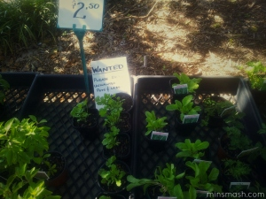Manly Markets - Plants
