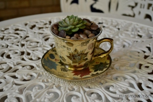 Teacup Cactus at home