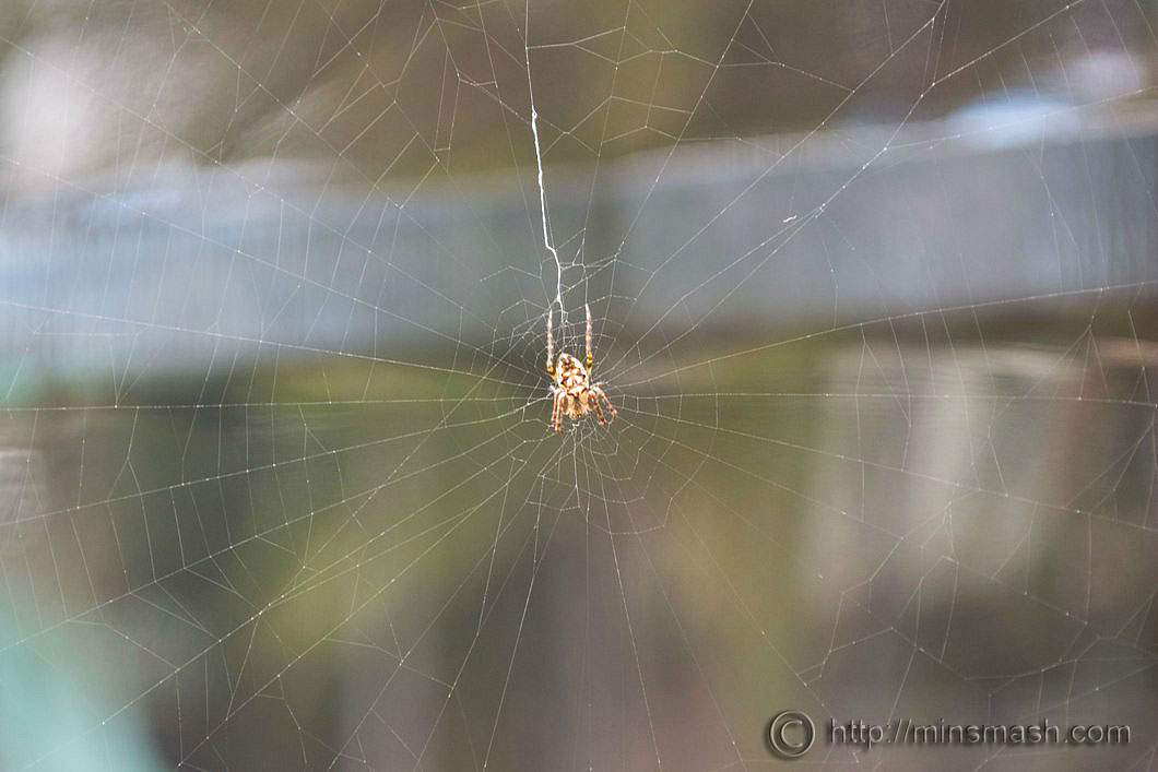 Spider, Spiders Web