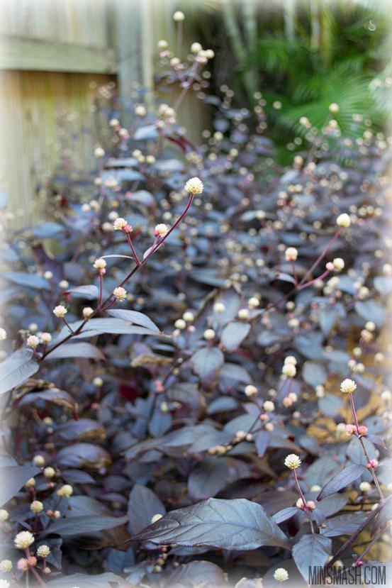 Plant, Garden