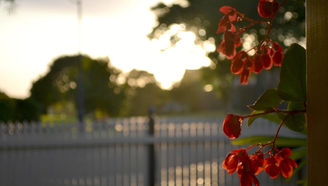 garden, front yard