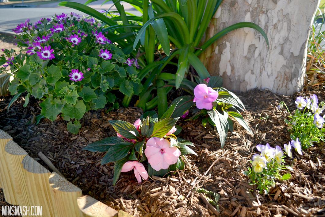 Flowers, Garden