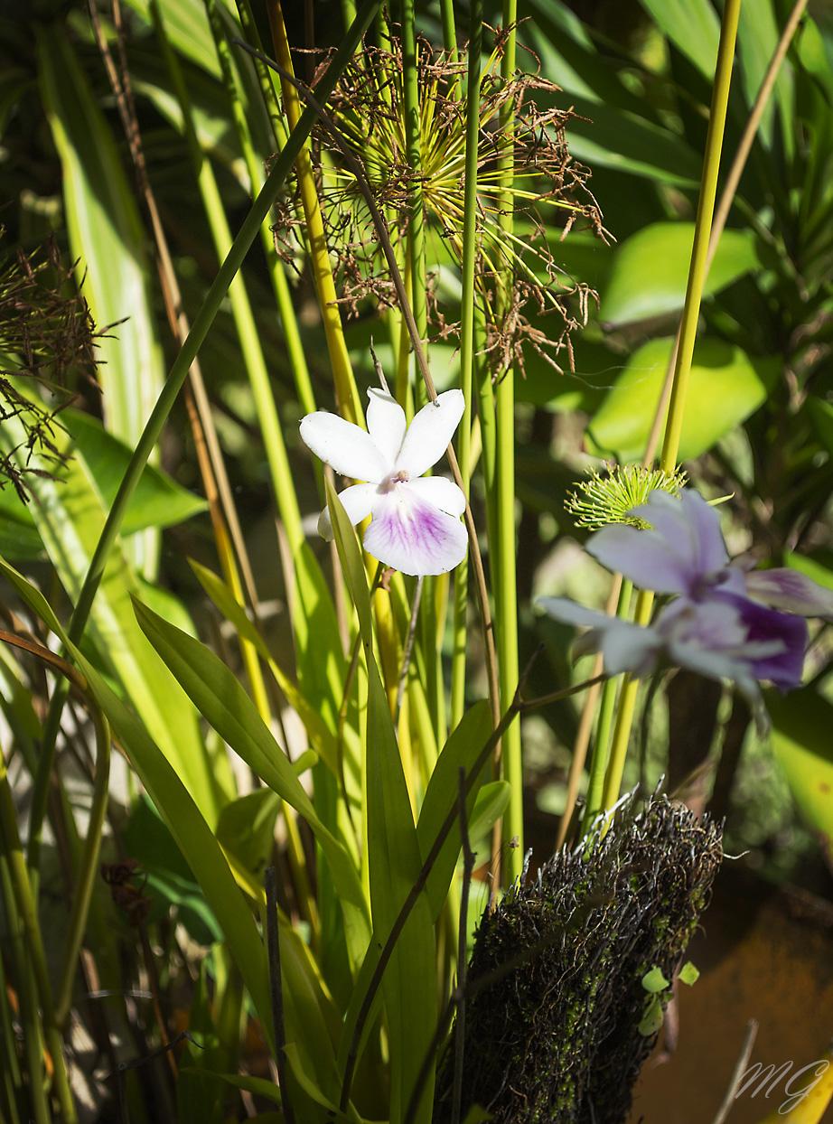 flowers, flower, nature, garden