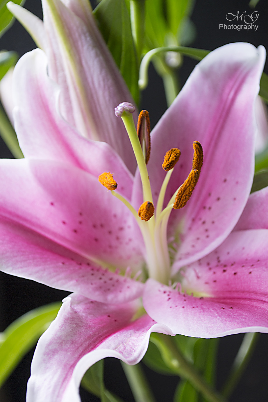 Lillies, Flowers