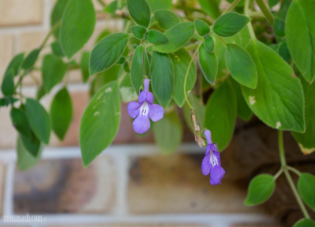 garden, pot plant, flowers
