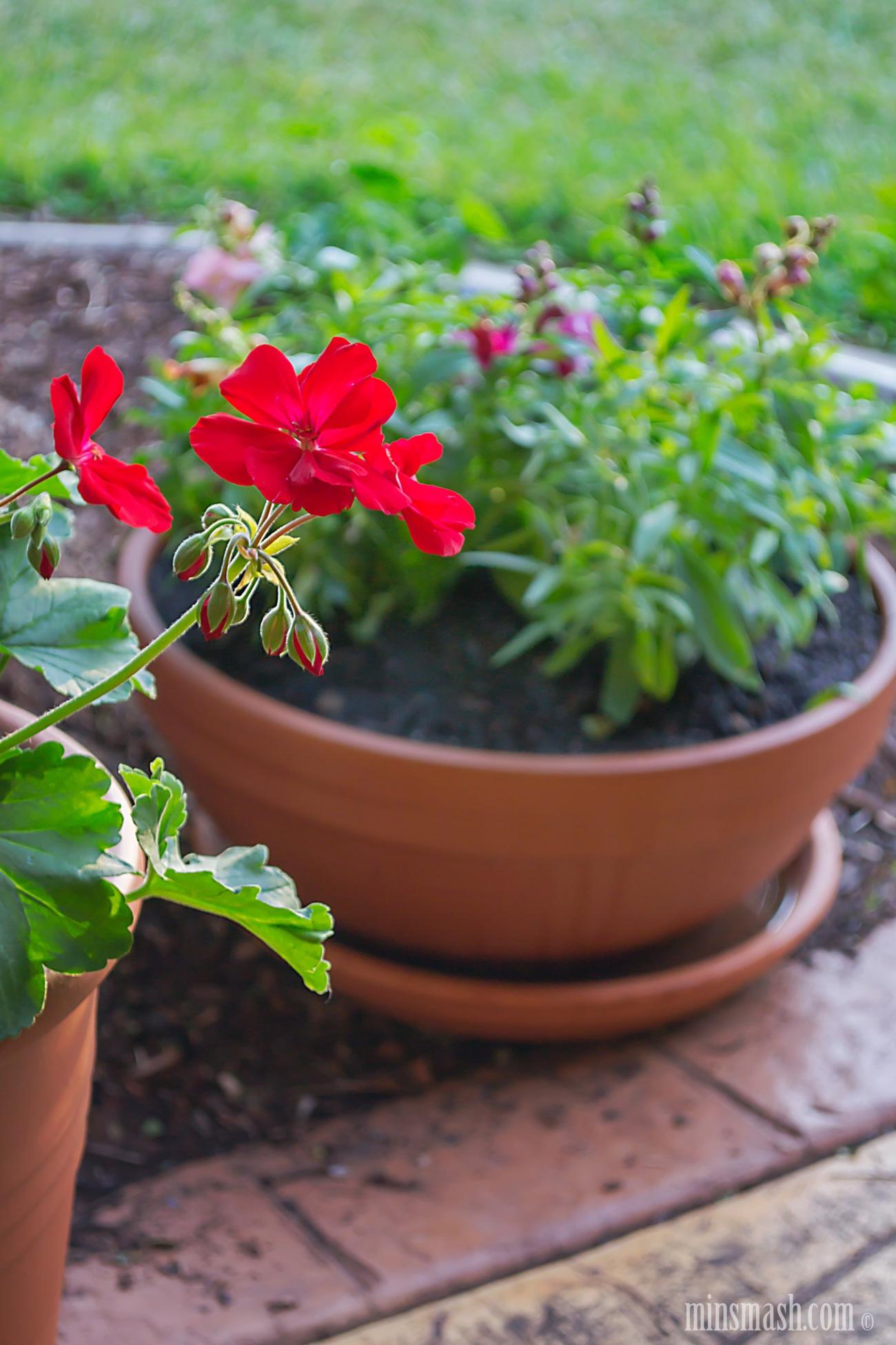 garden, pots, pot plants