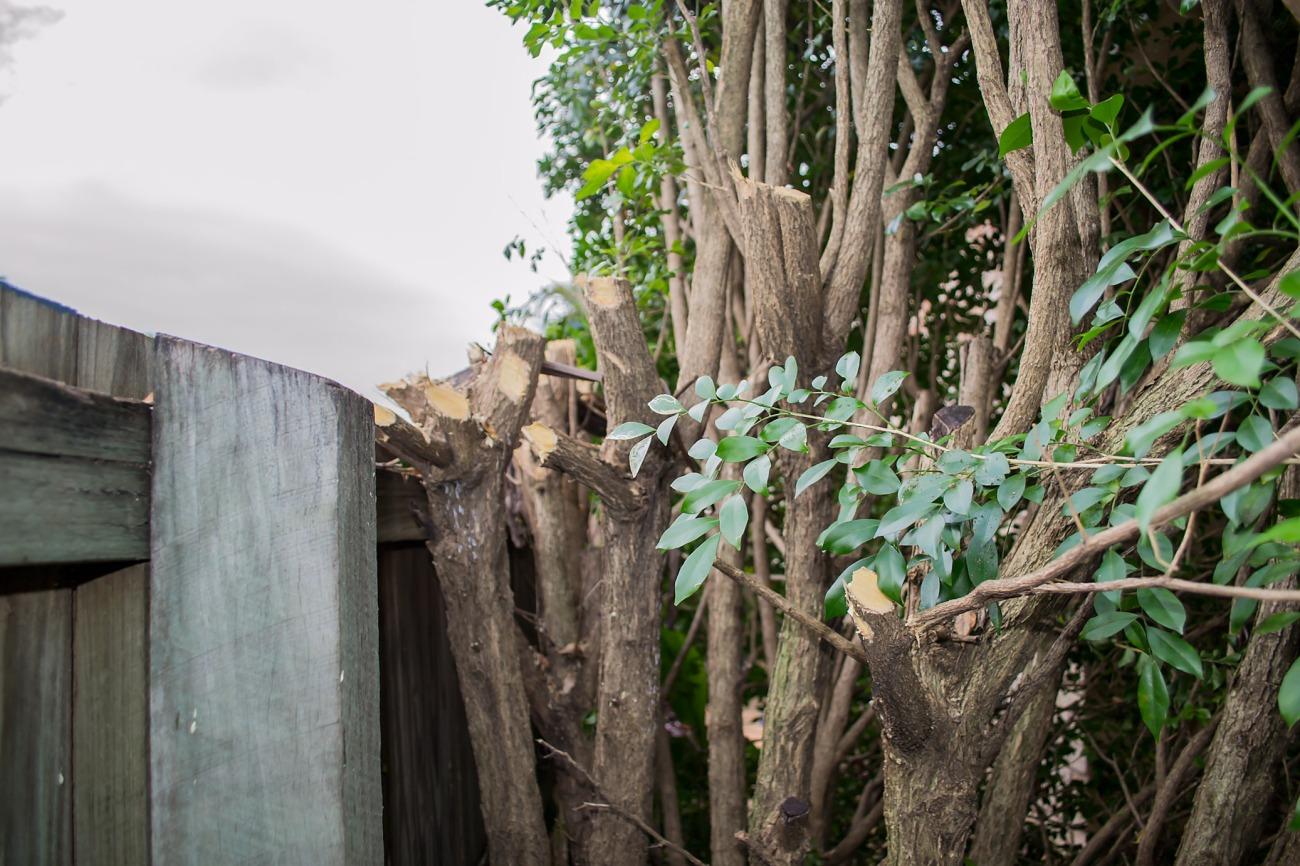 Brutalised Side Garden2