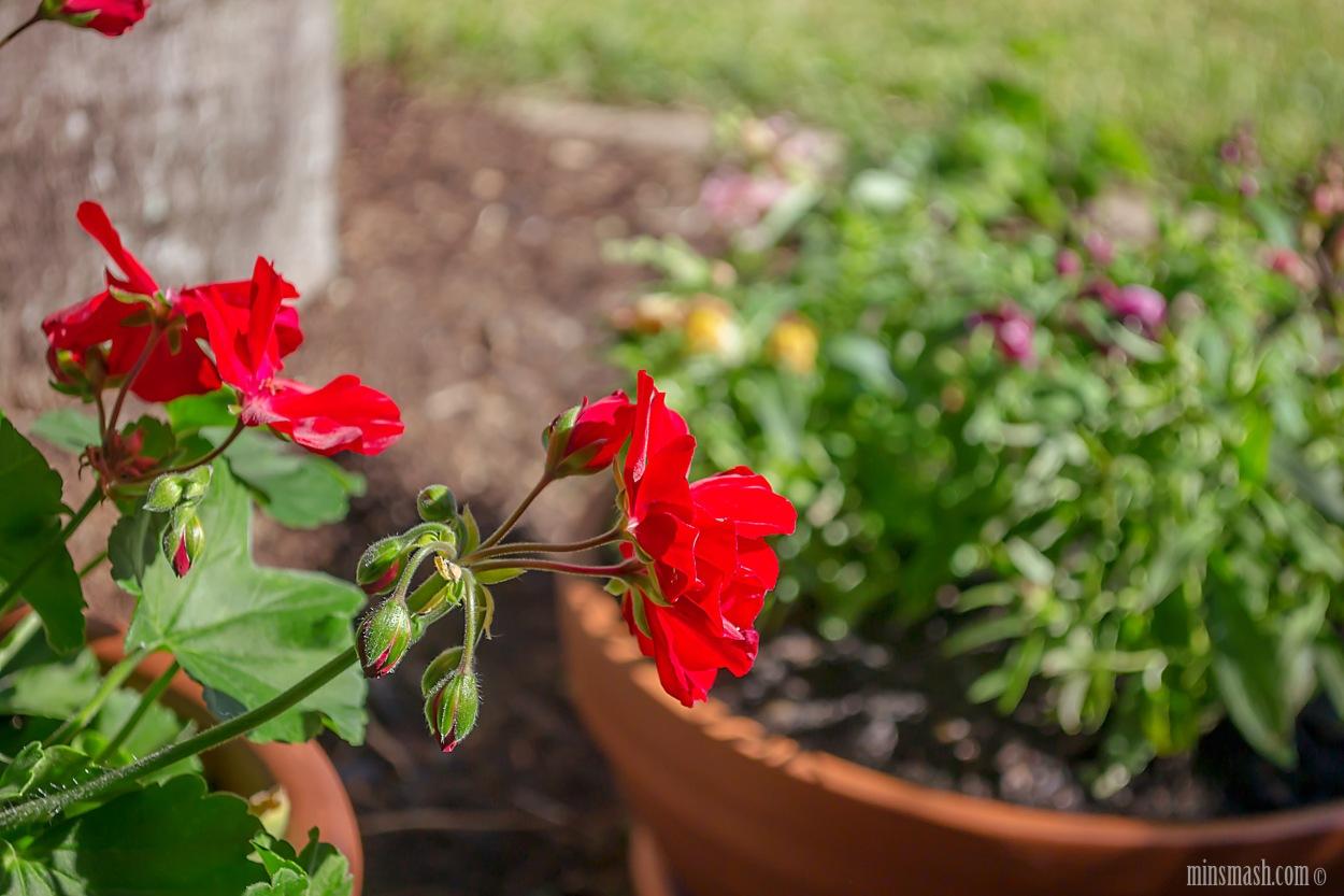 garden, pots, pot plants,