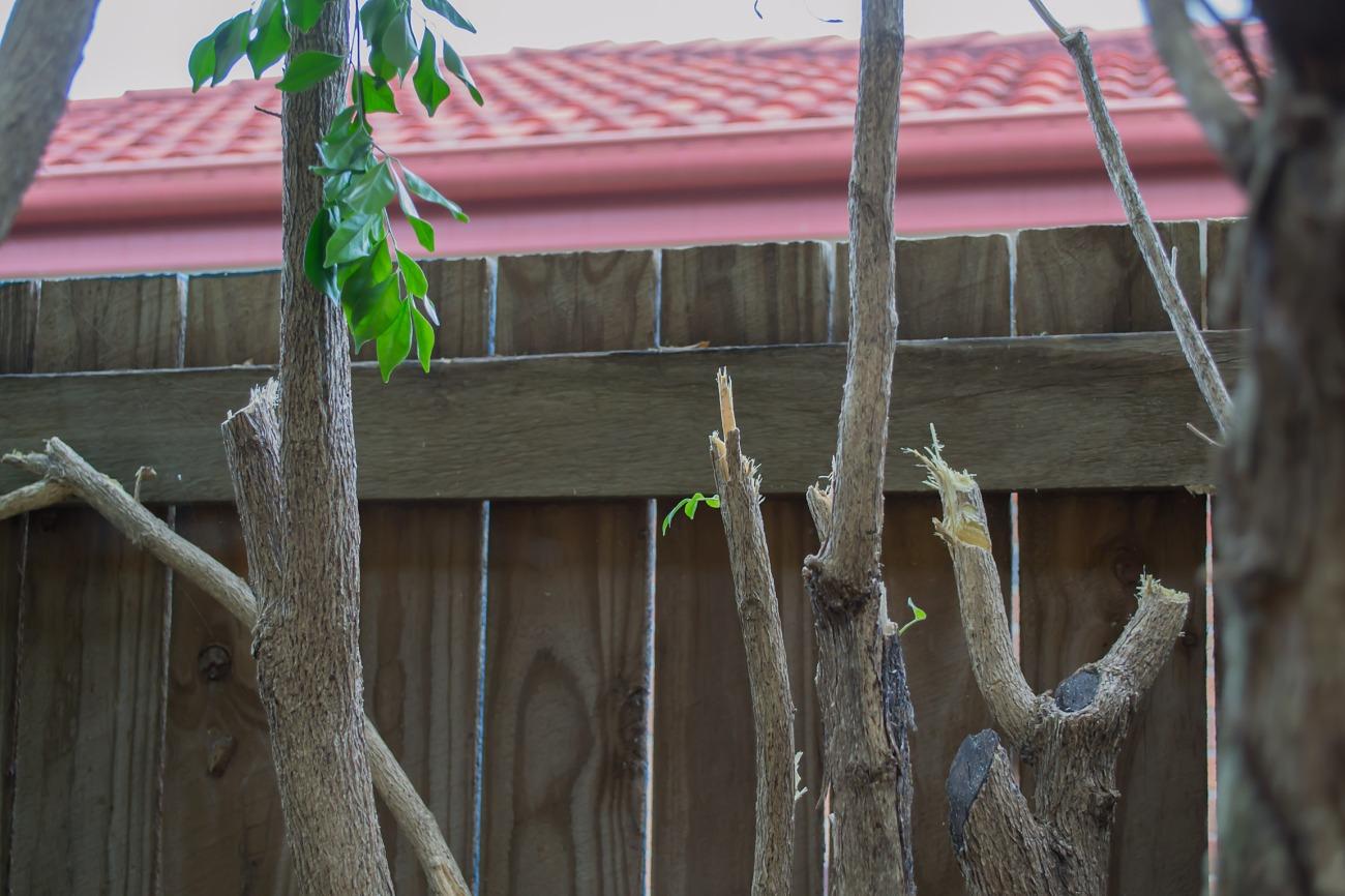 Brutalised Side Garden3