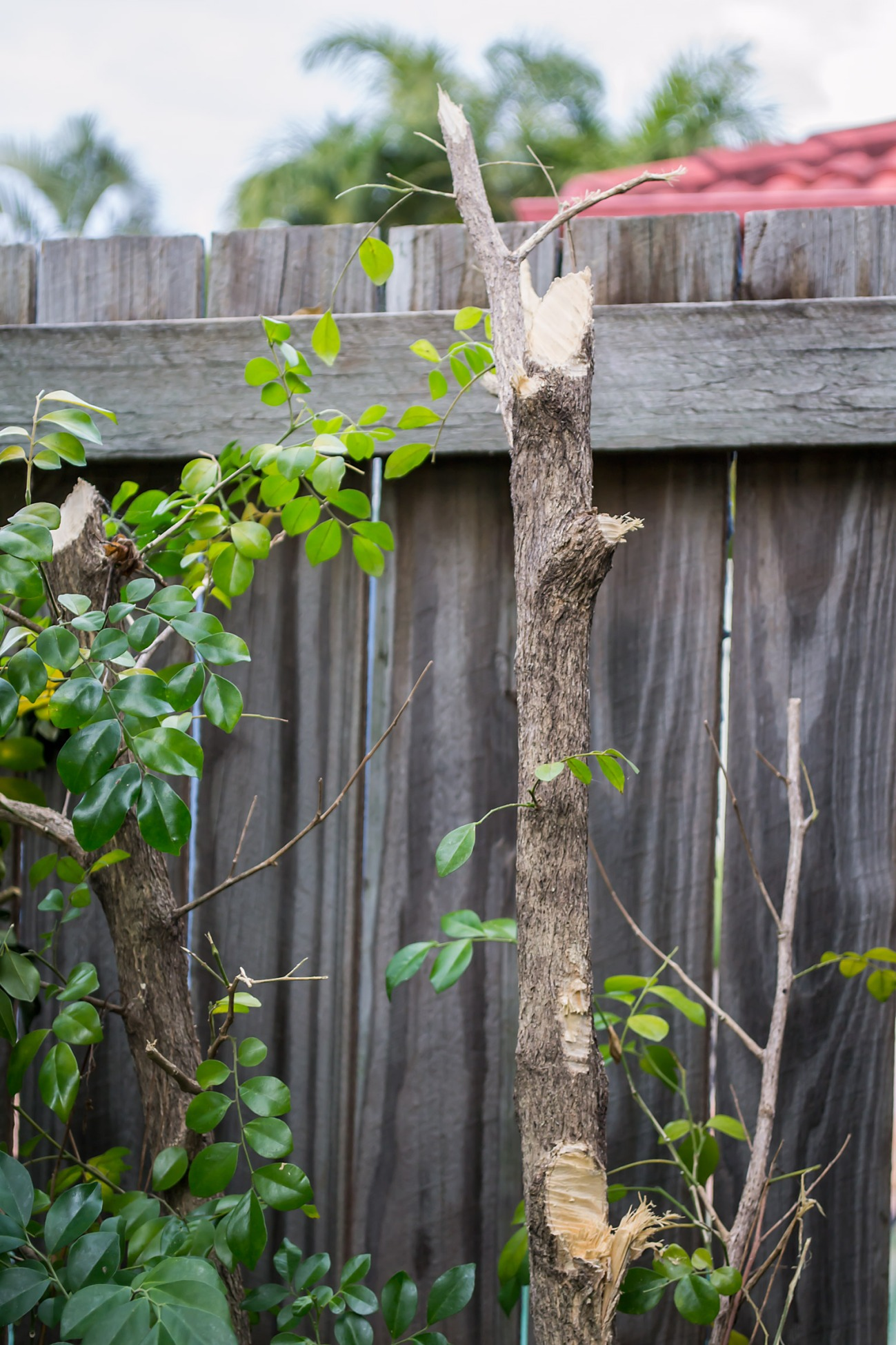 Brutalised Side Garden4