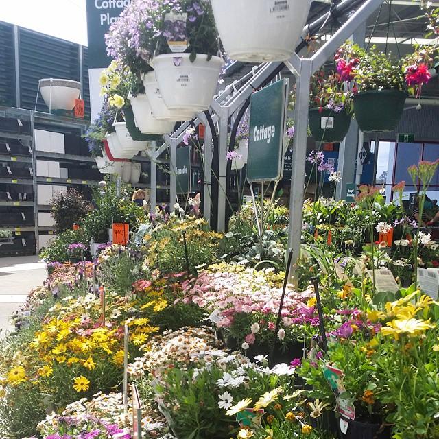 Garden Centre Bunnings